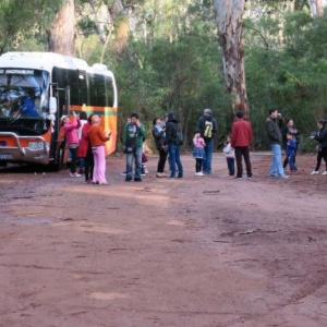 forest-tour