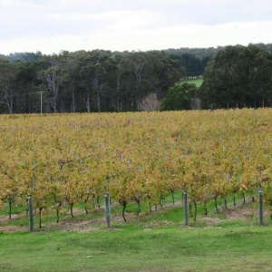 swan-valley-vineyard